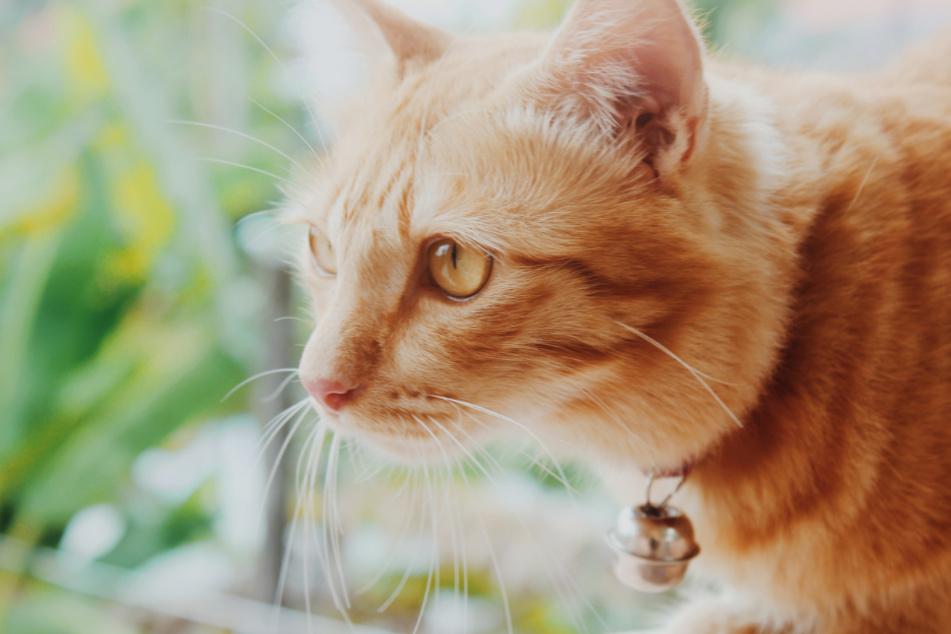 Katzen lösen Wohnungsbrand aus und kommen dabei ums Leben