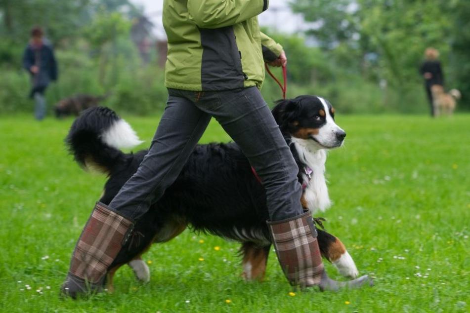 Hunde müssen im Pegnitztal künftig an die Leine. (Archivbild)