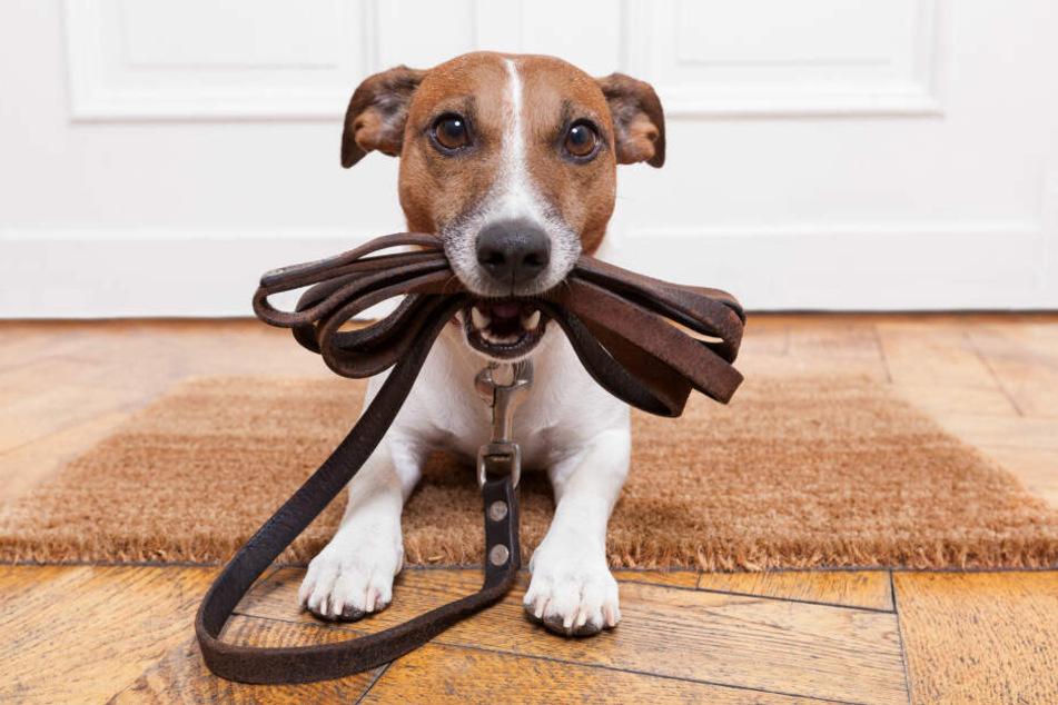 Wenn es um ihre Lieblingsbeschäftigung geht, nehmen Hunde oft kleinste Signale ihres Besitzers wahr.