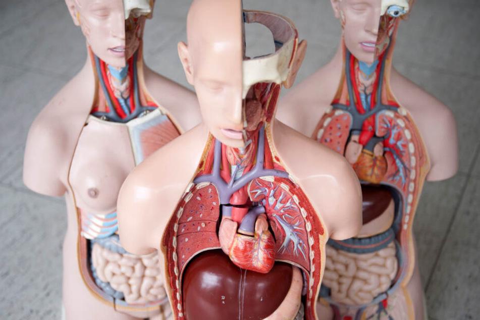 2008 bekam Lisa ein neues Herz transplantiert. (Symbolbild)