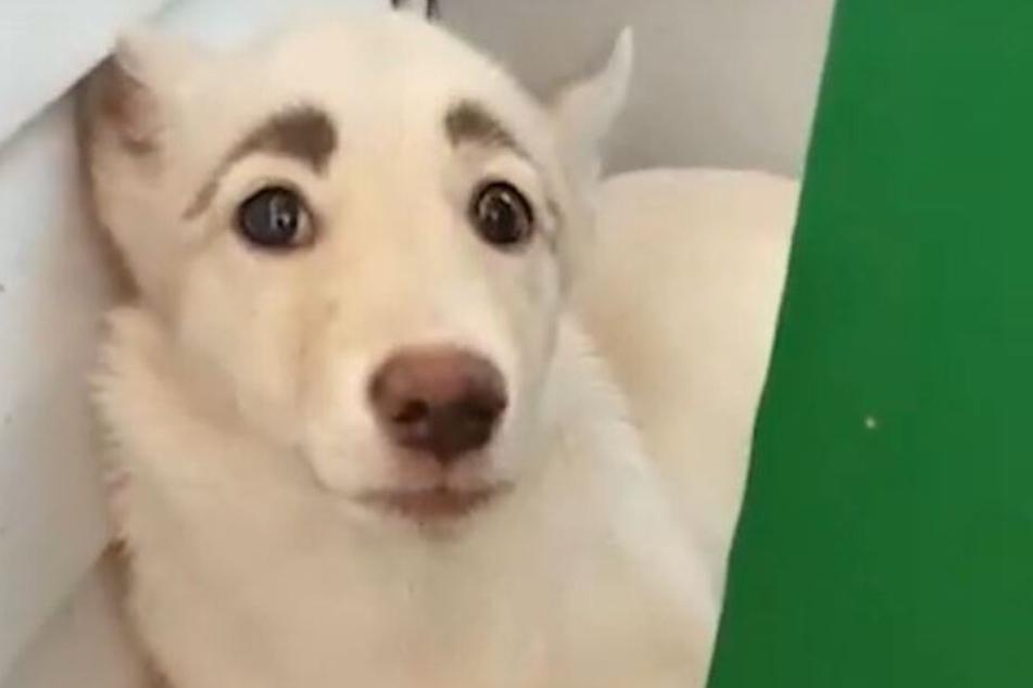 Weltweit Lachen Sich Alle über Diesen Hund Tot Tag24