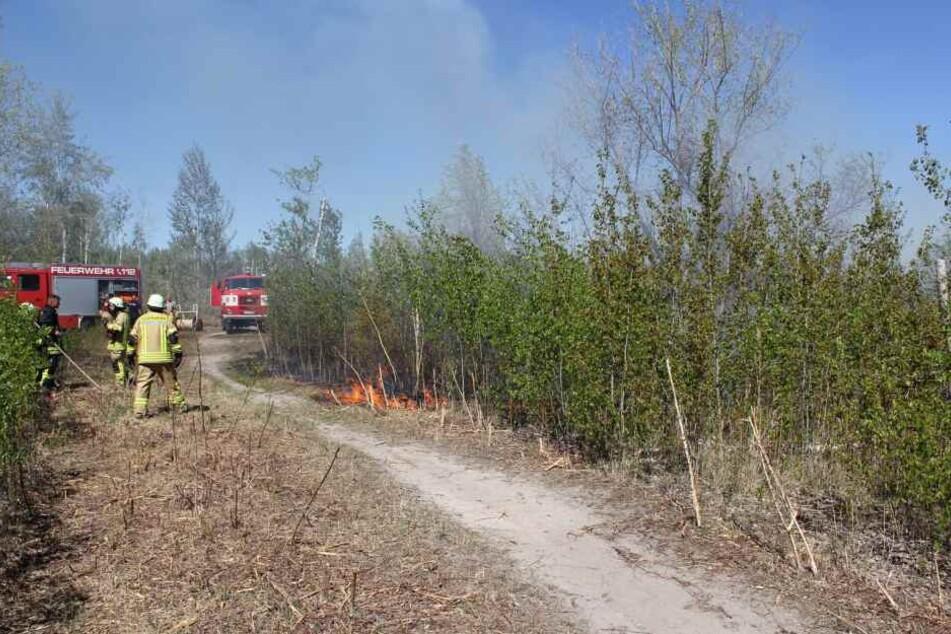Etwa 500 Quadratmeter Wald und Wiesenfläche galt es zu löschen.