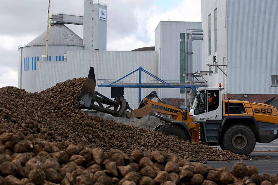 Die Jülicher Zuckerfabrik. (Archivfoto)