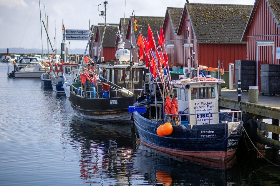 """Krise deutscher Ostseefischer spitzt sich zu: """"Es ist katastrophal"""""""