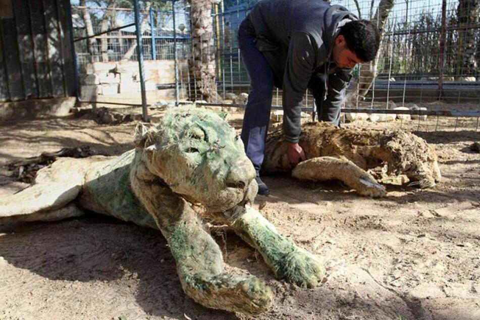 Zoo lässt Tiere ohne Essen und Trinken zurück