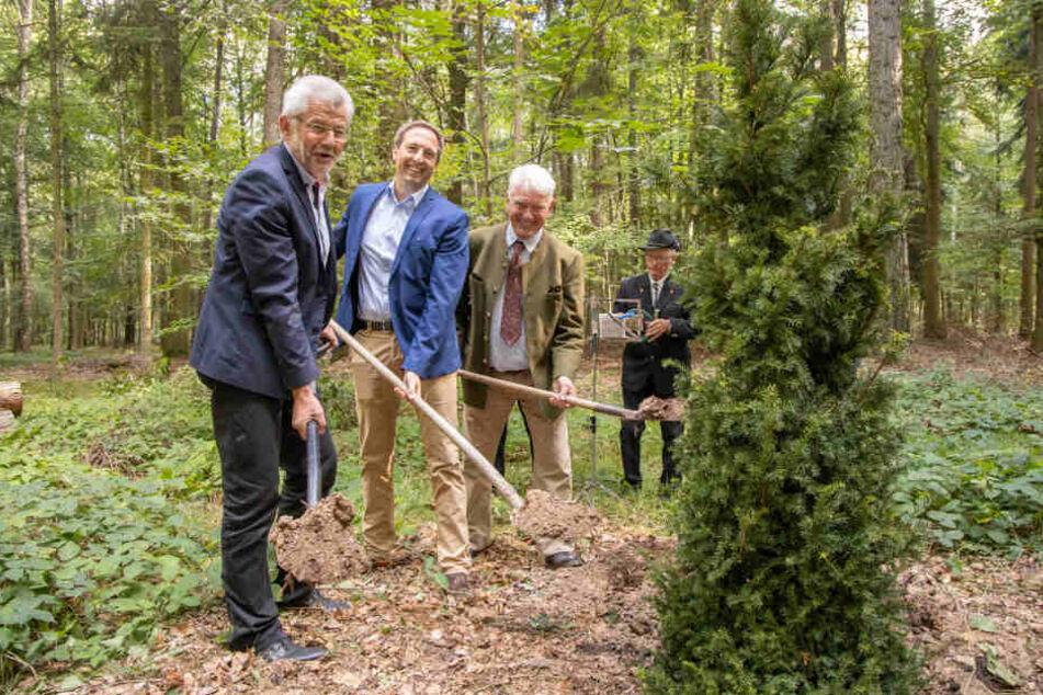 Bürgermeister Bernd Pohlers, Franz Freiherr von Feilitzsch und Matthias Laufer (v.l.) pflanzten eine Eibe im neuen Friedwald.