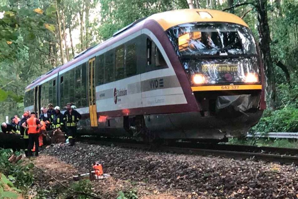 Ein zweistündiger Großeinsatz der Feuerwehr war die Folge des gekippten Baumes bei Pulsnitz.