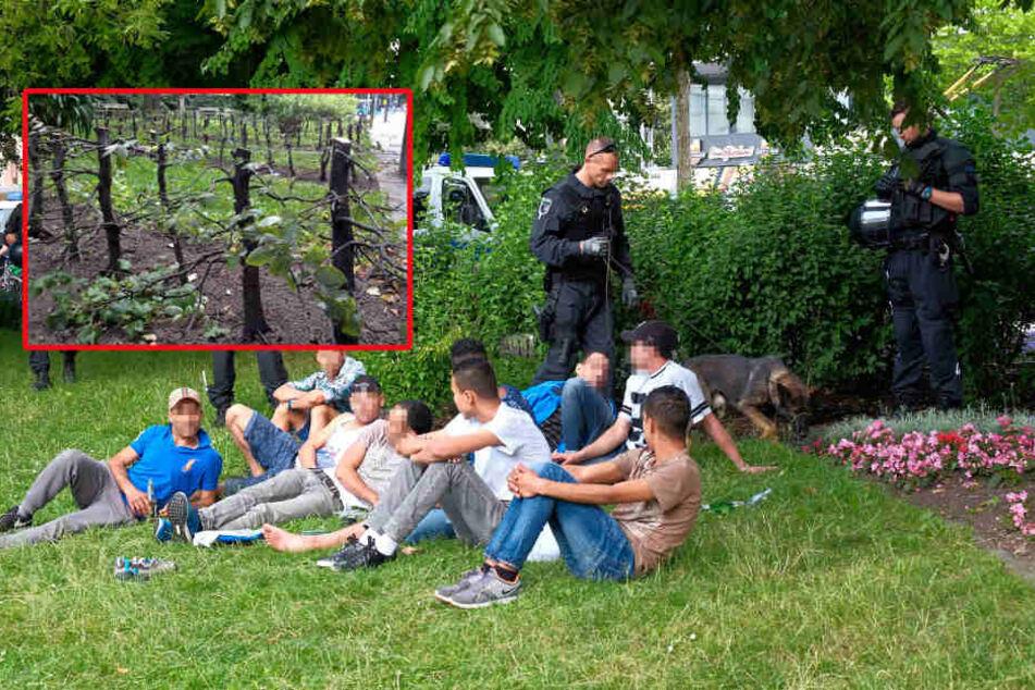 Chemnitz will Bäume wegen Drogen-Dealern fällen
