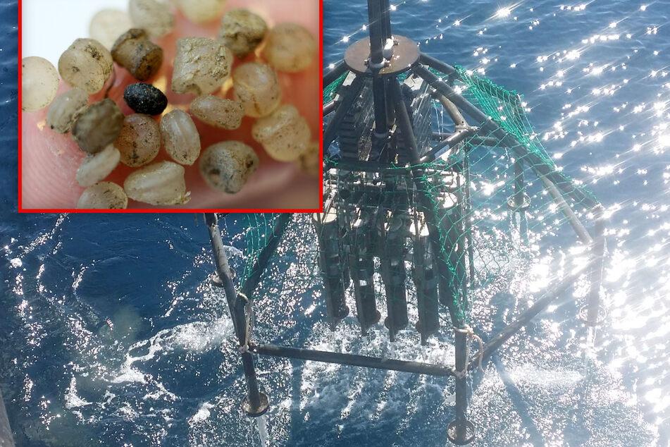 Gefahr für Mensch und Tier: Forscher machen besorgniserregende Entdeckung im Pazifik