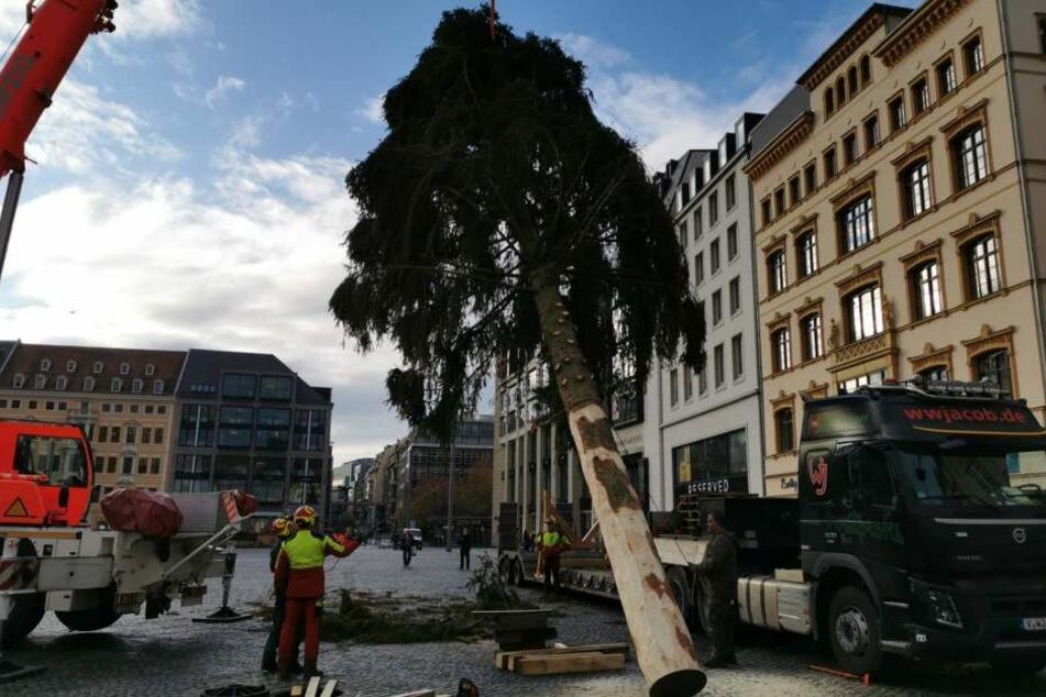 Der Baum soll gleich im Anschluss an das Aufstellen geschmückt werden, bevor am 11. November die Aufbauarbeiten für den Weihnachtsmarkt beginnen.