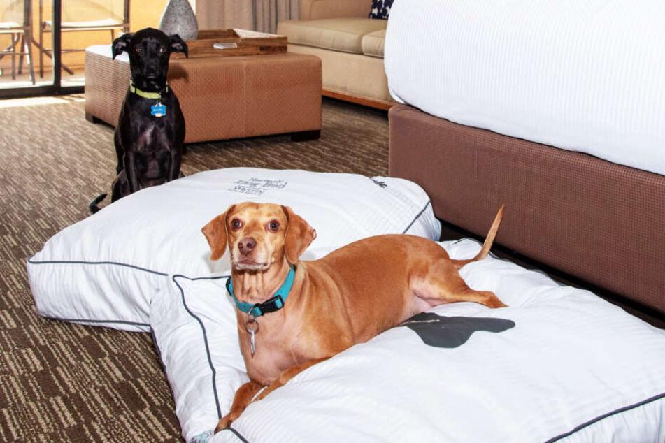 Die Hunde können im Hotelzimmer auf speziellen Kissen nächtigen.