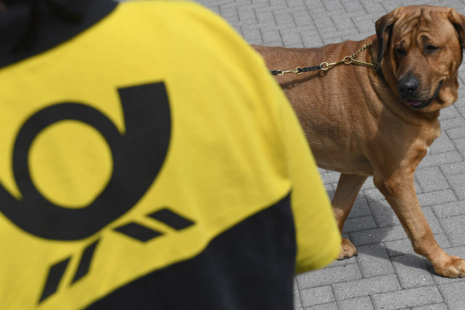 Es passiert immer wieder: Hundebisse gehören für Postboten fast zum Alltag