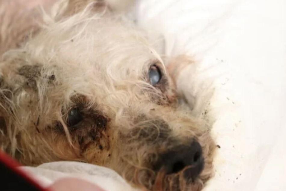 Mann wirft Hund zum Sterben von Brücke: Jetzt geht er gegen Haftstrafe vor!