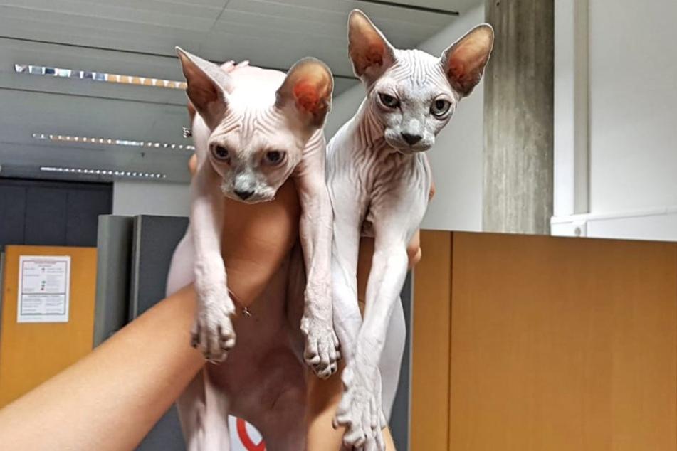 Die Reise der Katzen endete vorerst in Stuttgart. Dann ging's zurück in die Ukraine.