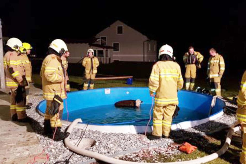 Zahlreiche Einsatzkräfte pumpten Wasser aus dem Pool, um das Tier zu retten.