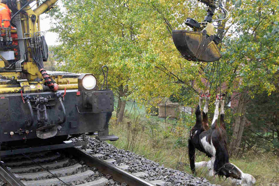 Auch 2009 verendeten zwei Pferde, als sie in der Nähe von Bitterfeld auf die Gleise liefen. (Archivbild)