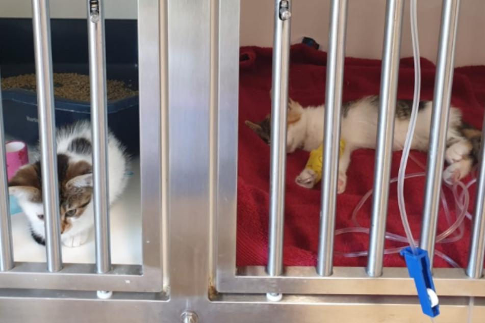 Zwei der drei gefundenen Kätzchen schweben noch in Gefahr - für die dritte Miez kam jede Hilfe zu spät.