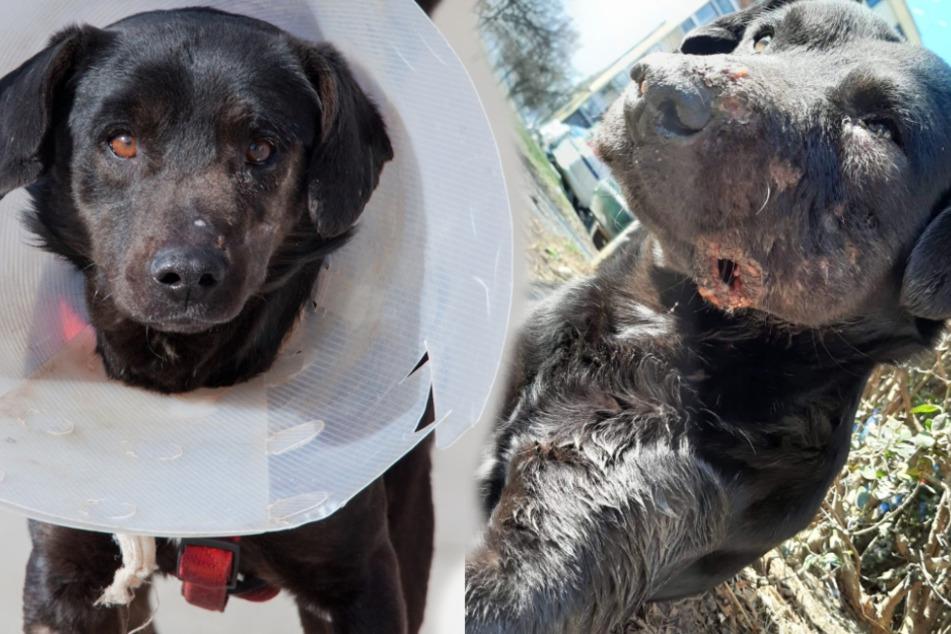 Hund Akko hat sich von seinen schweren Verletzungen größtenteils wieder erholt.