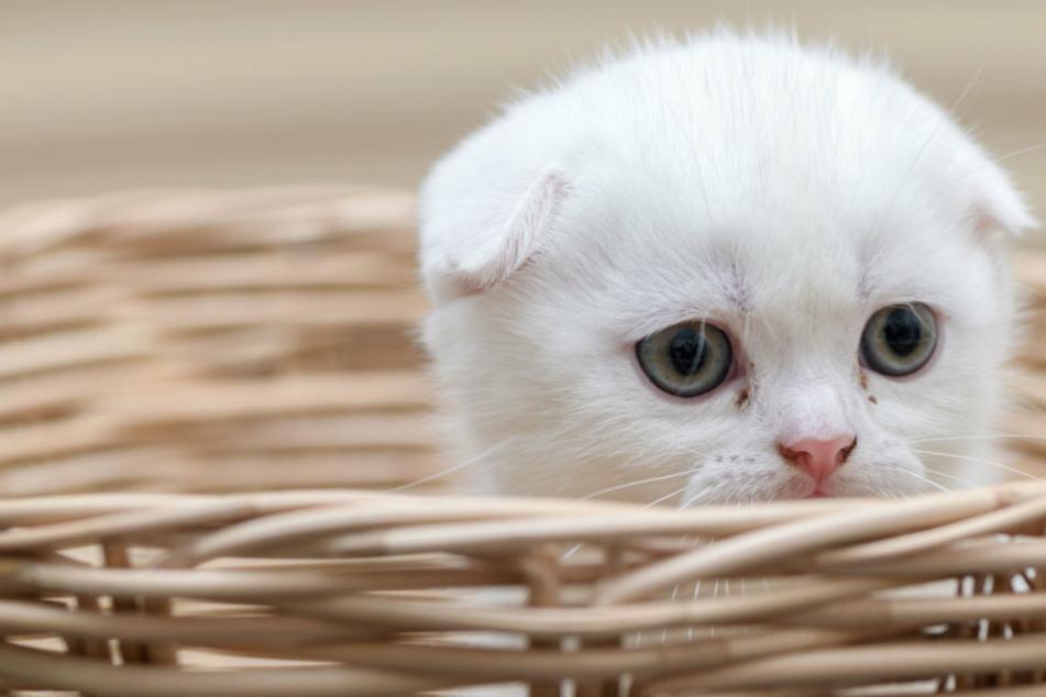 Einfach in den Korb packen und mitnehmen? So einfach geht es bei Katzen leider nicht!