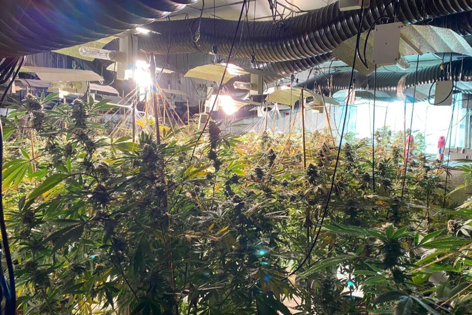 Das Handout der National Crime Agency (NCA) zeigt eine dreistöckigen Cannabis-Farm, die in einem ehemaligen Nachtclub in der Trinity Street in Coventry entdeckt wurde.