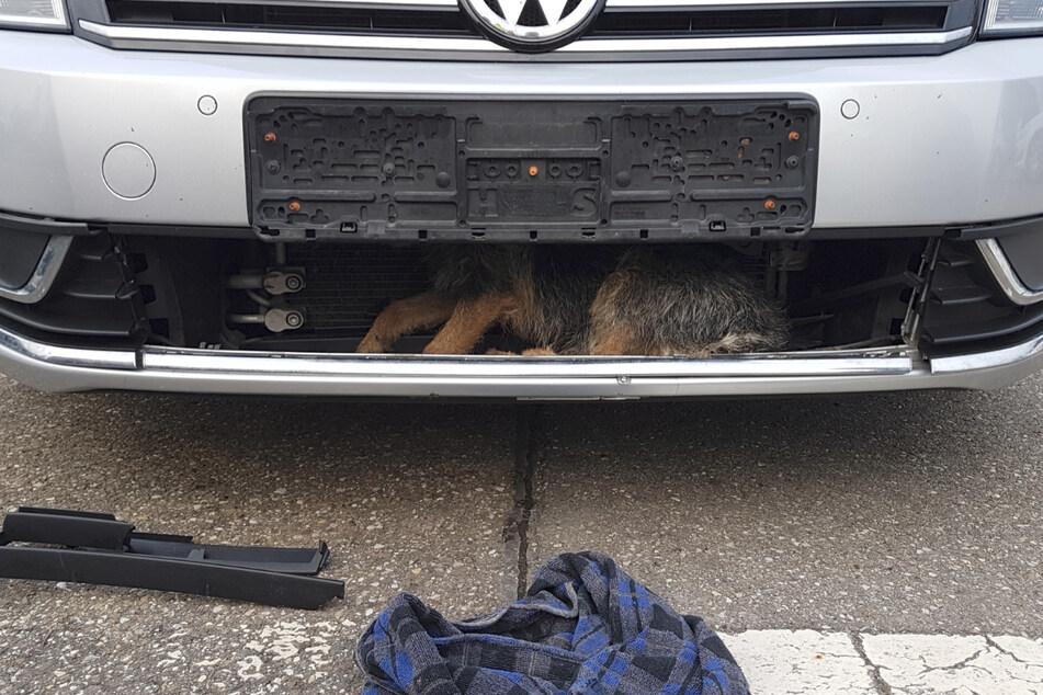 Hund verschwindet bei Unfall in Auto und fährt rund 40 Kilometer mit