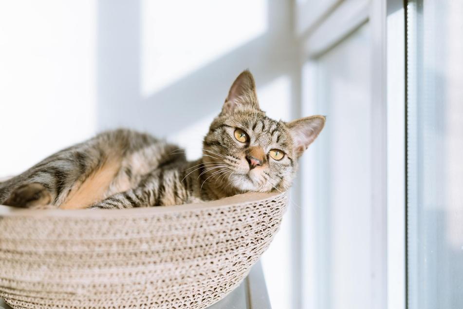 Veränderungen können nicht nur für ältere Katzen ganz schön lästig sein.