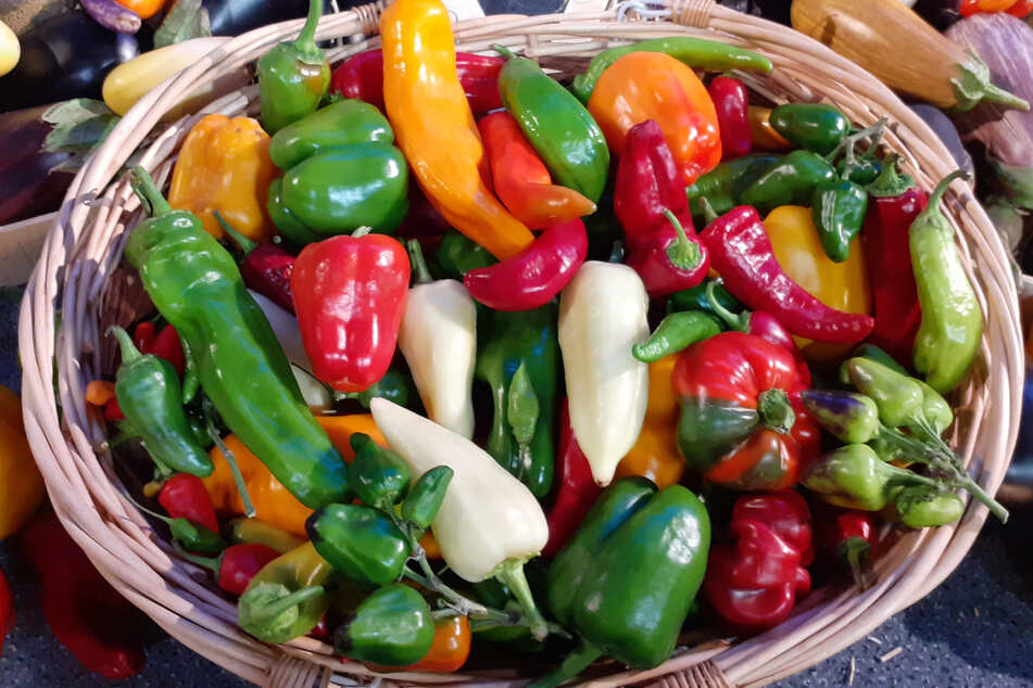 Erfolgsgemüse Paprika hat kulinarische Tradition auf der ganzen Welt verändert