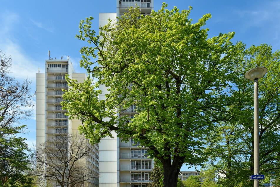 Rund um diese alten Bäume gab es früher einen Teich und das Rundlingsdorf Altgruna, erhalten davon ist nichts.