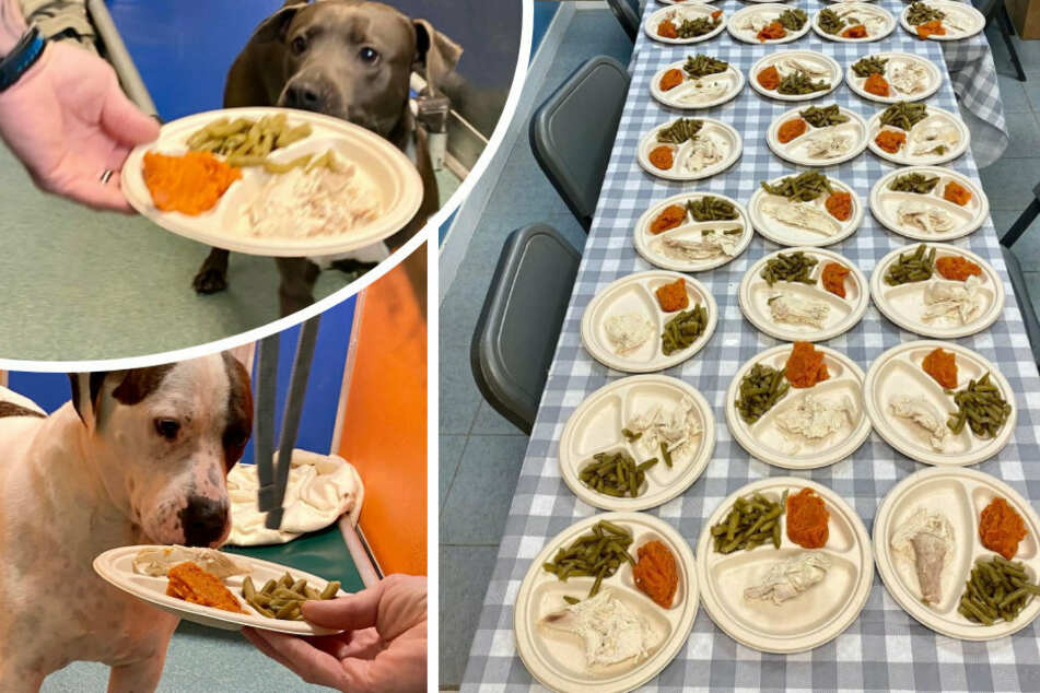 Staff members arranged a Thanksgiving meal for the animals in their care.