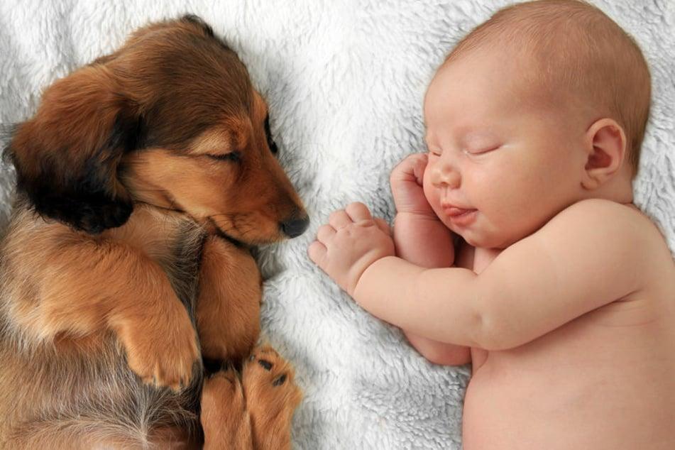 Hund und Baby: Welche Gefahren sollte man ernst nehmen?