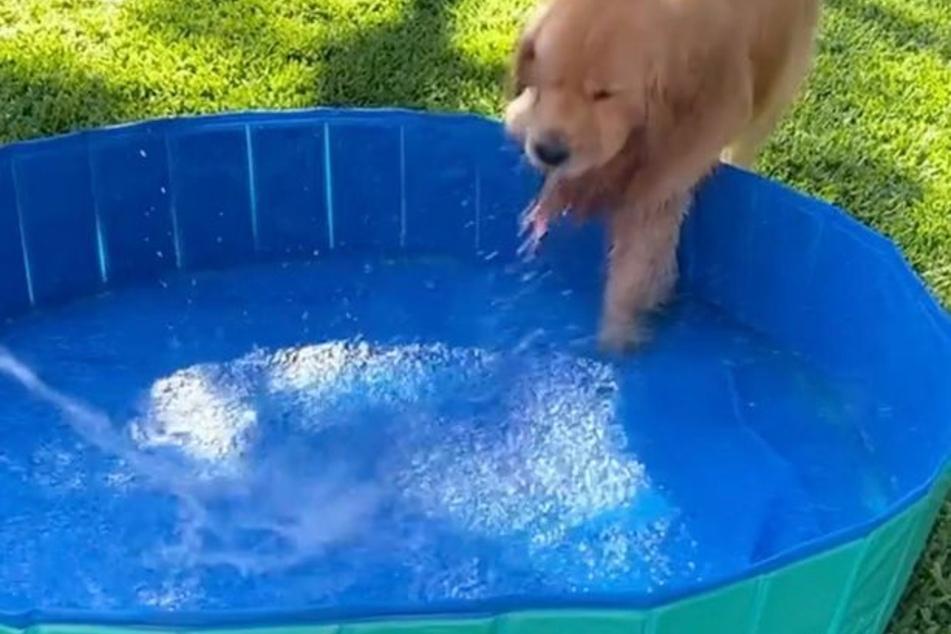 Süßes Video zeigt, warum Golden Retriever Cooper Wasser so sehr liebt