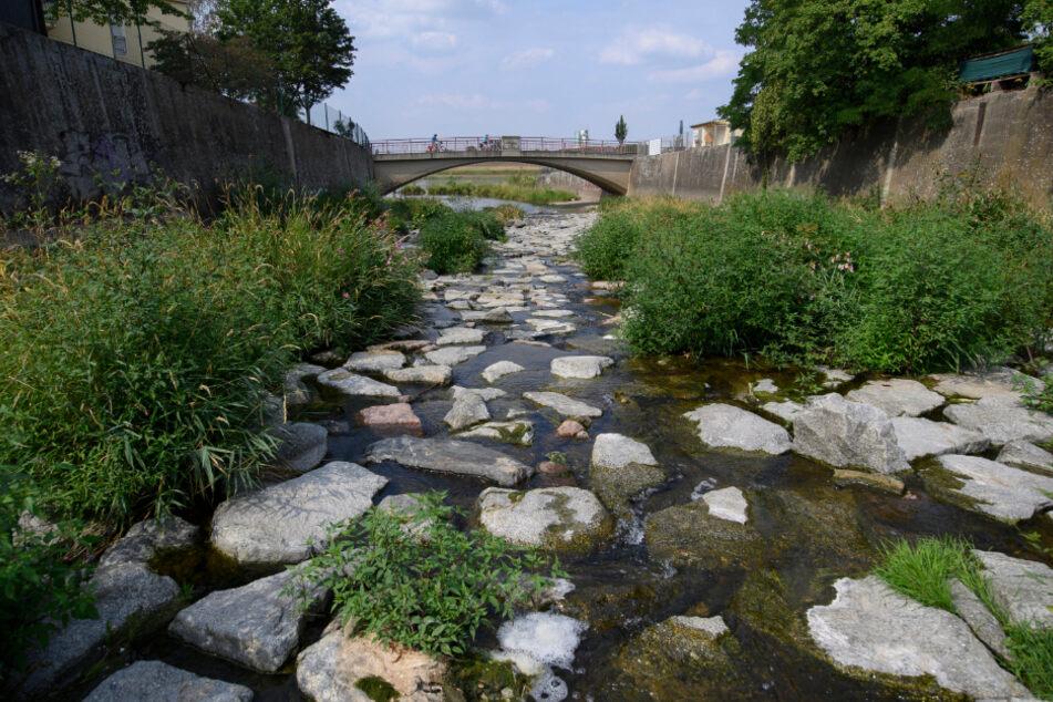 Auch die Weißeritz an der Mündung zur Elbe ist kaum mehr als ein Rinnsal.
