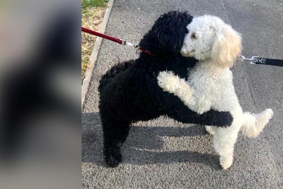 Geschwister-Hunde sehen sich mehrere Monate nicht, dann folgt die Überraschung