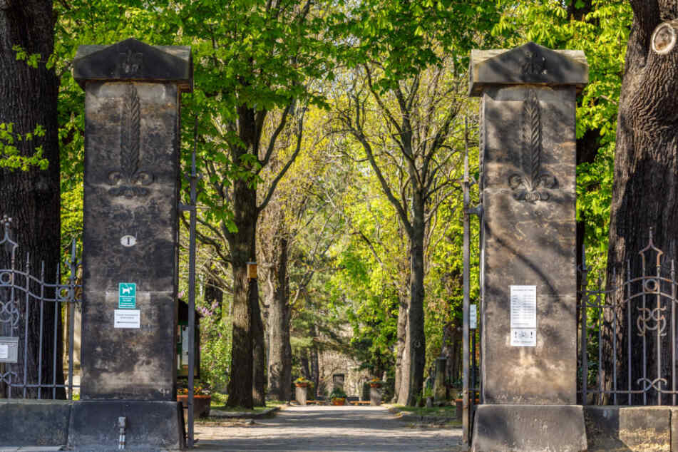 Auf dem Trinitatisfriedhof in der Johannstadt werden wilde Tiere bejagt.