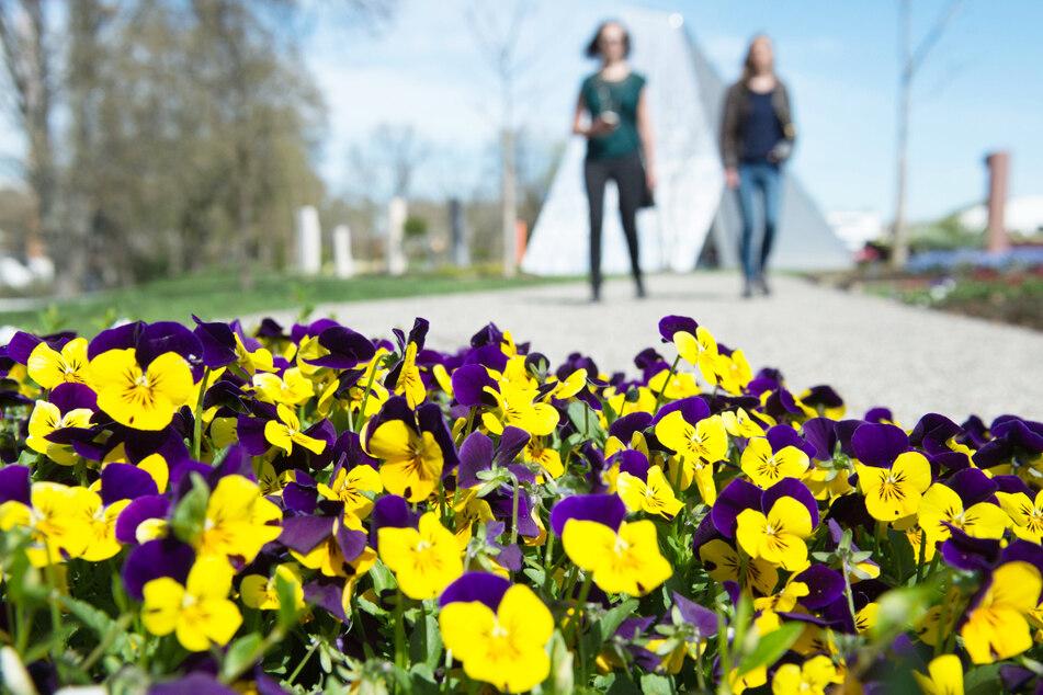 Ingolstädter Landesgartenschau wird eröffnet: Es gibt jedoch einen Haken