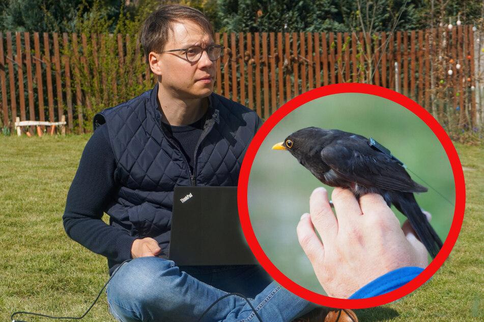 Leipzig: Leipziger Forscher will Vögel über Raumstation überwachen