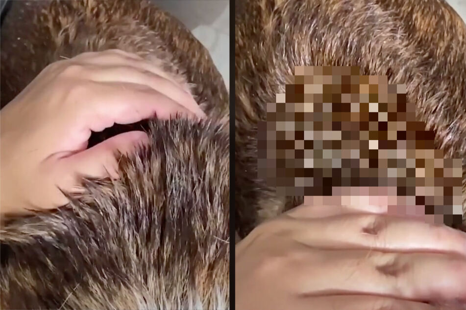 Man makes disgusting discovery in his dog's fur