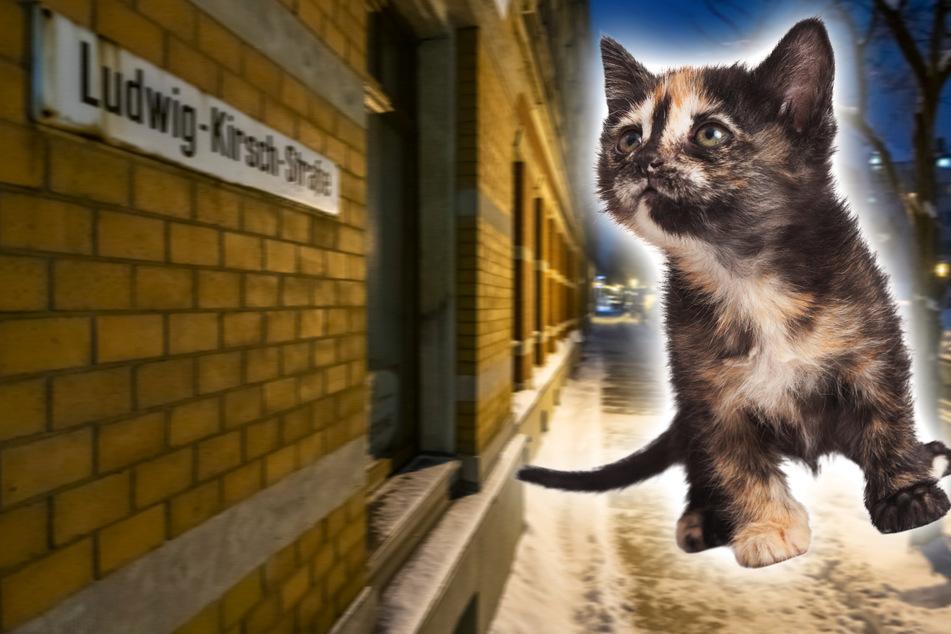 Frau soll Katzenbaby vom Balkon geworfen haben, ihren Prozess lässt sie zum 3. Mal platzen