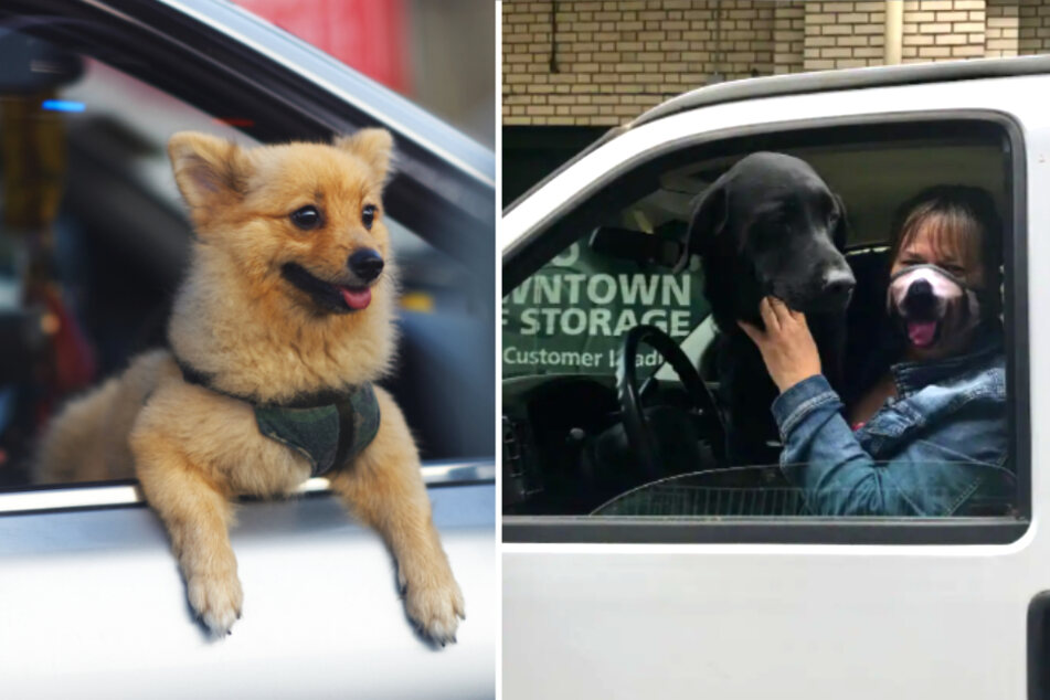 Thief got away with twelve dogs, but animal lovers were on his trail