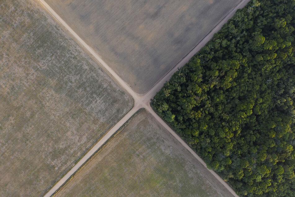 Amazonas-Regenwald neben Sojafeldern. Die Zerstörung des brasilianischen Amazonas-Gebiets geht - auch zugunsten der Landwirtschaft - auf hohem Niveau weiter.