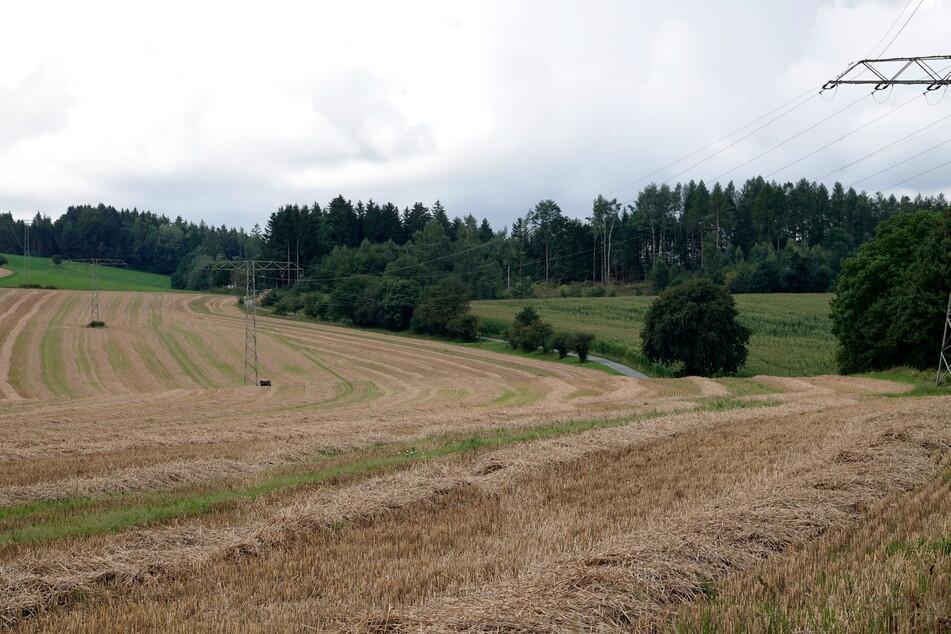 Zweiter Fundort im Erzgebirge: An einem Waldweg in der Nähe der S232 wurden Ende August Leichenteile gefunden.