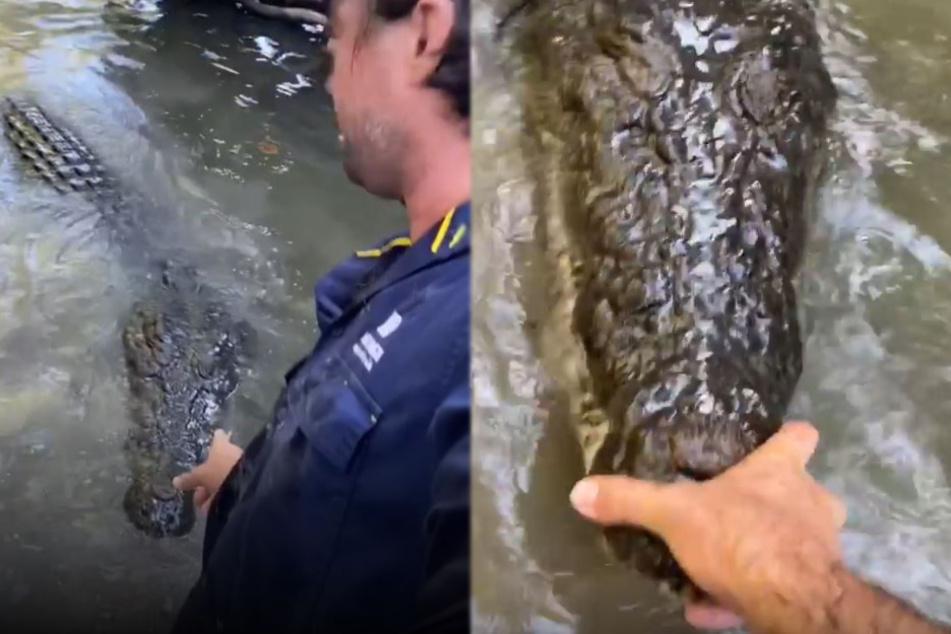 Geh nach Hause! Matt Wright schob das Krokodil an seiner Schnauze zurück, als wäre es eine Ente.