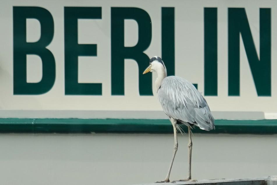 Vogelgrippe in der Hauptstadt angekommen: Zoo-Tiere in Gefahr!