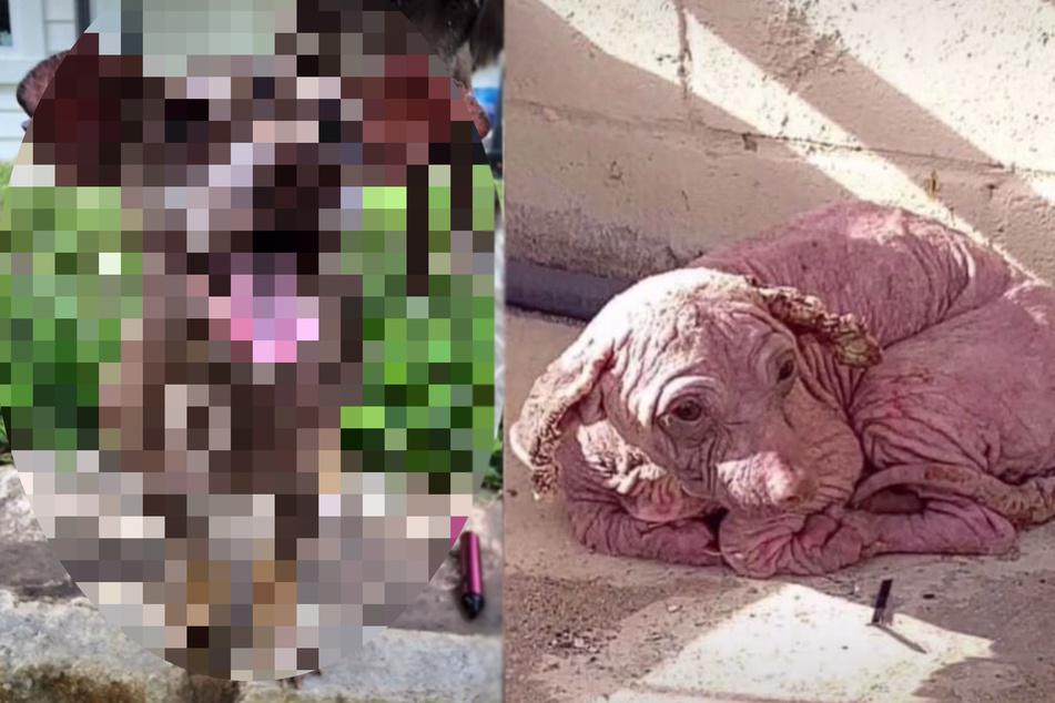 Was für eine Verwandlung: Armer Hund sieht nach Rettung total anders aus