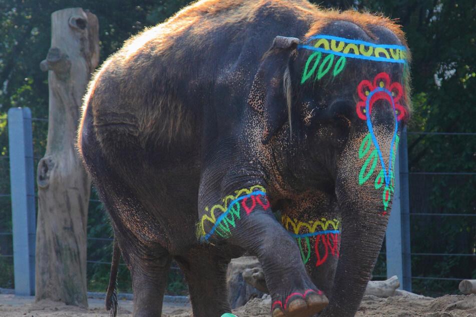 Bis heute unvergessen: 50. Geburtstag der Elefantenkuh Schöpfi.