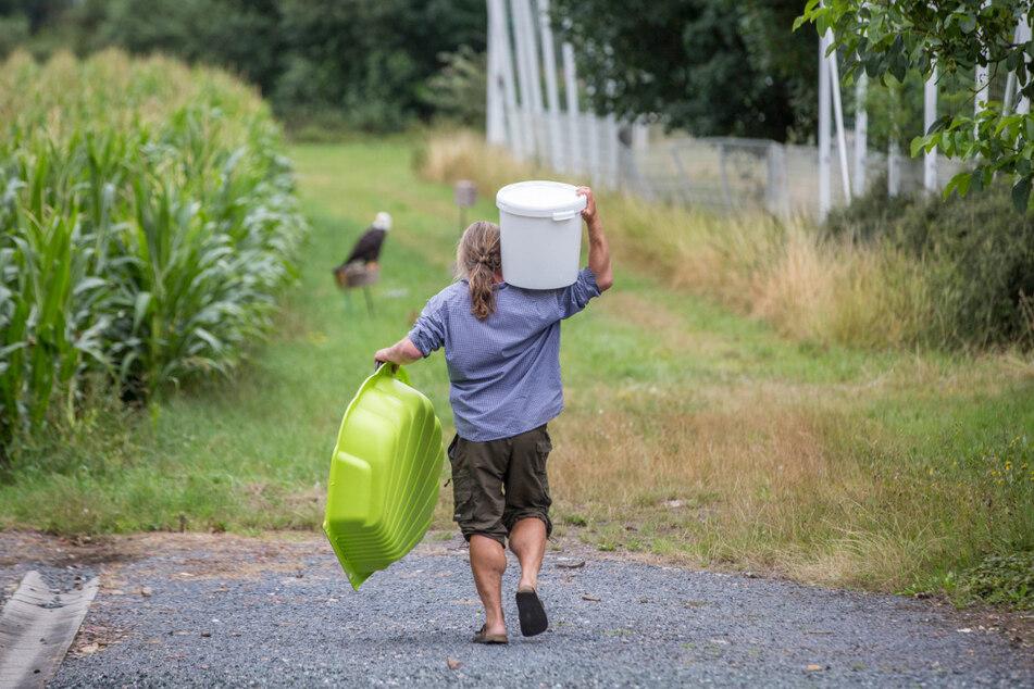 Dann kam Plan B: Mit einer Wanne, in die er Wasser und Fisch gab, wollte Schaaf den Riesenseeadler einfangen.