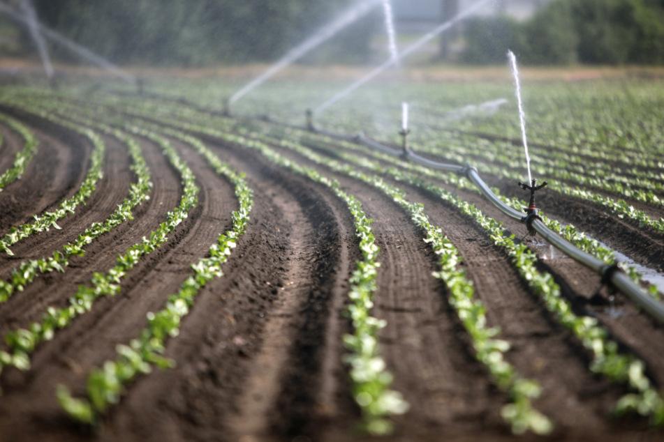 Zur Sicherung der Trinkwasserversorgung und zum Schutz gegen Dürren auch in der Landwirtschaft muss der Freistaat Bayern seine Wasserstrategie neu an den Klimawandel anpassen. (Symbolbild)