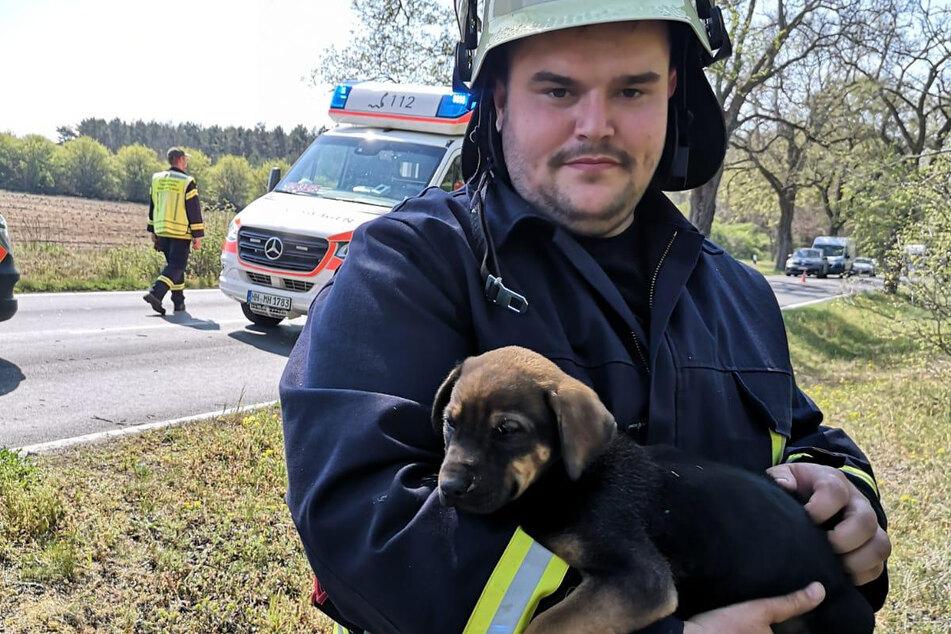 Ein Hund wurde ebenfalls gerettet.