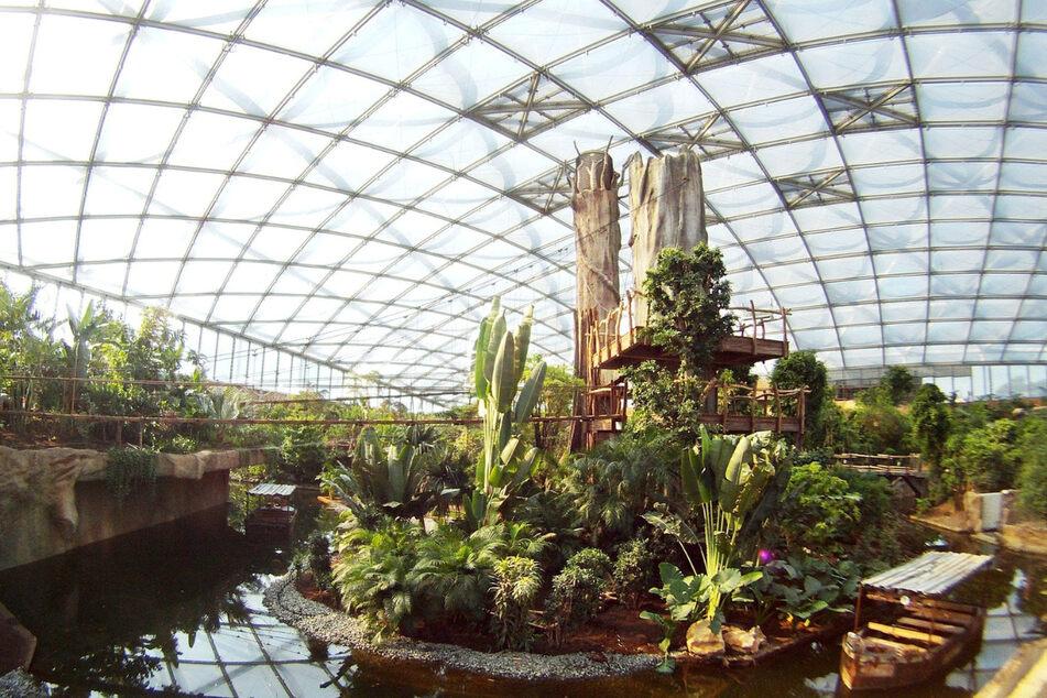 Heute versteckt sich unter der Glaskuppel im Leipziger Zentrum ein Paradies mit zahlreichen exotischen Tieren und außergewöhnlichen Pflanzen.