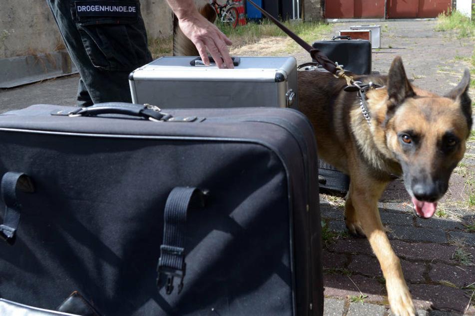 Polizeihund findet bei Autokontrolle in Heppenheim halbes Kilo Kokain